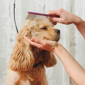 dog groomer las vegas