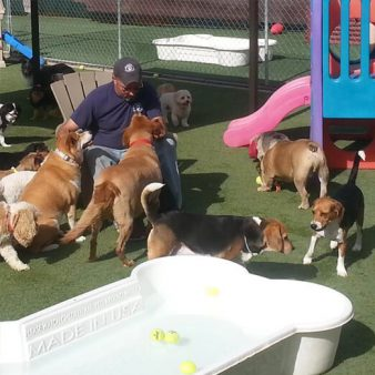 Dog Day Care Las Vegas, NV
