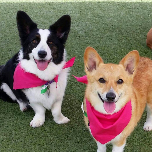 dog boarding and daycare las vegas