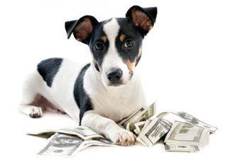 yappy hour discount dog day care las vegas