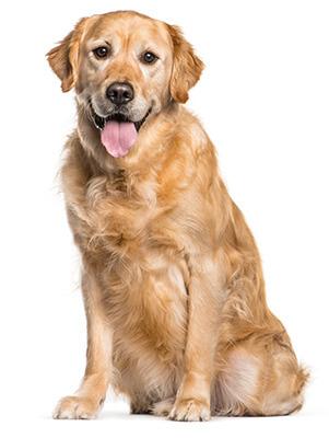 Doggie daycare las vegas, nv