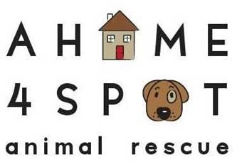 A Home for Spot rescue